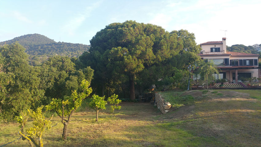 View on Villa Costa Barcelona from the citrus trees