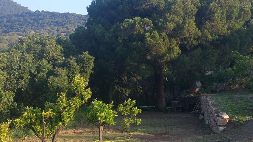 Garden Villa Costa Barcelona with citrus trees